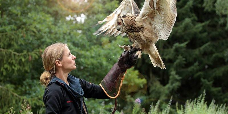 trained Owl