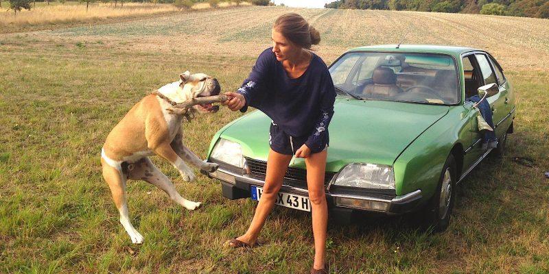 Animal Actors Dogs