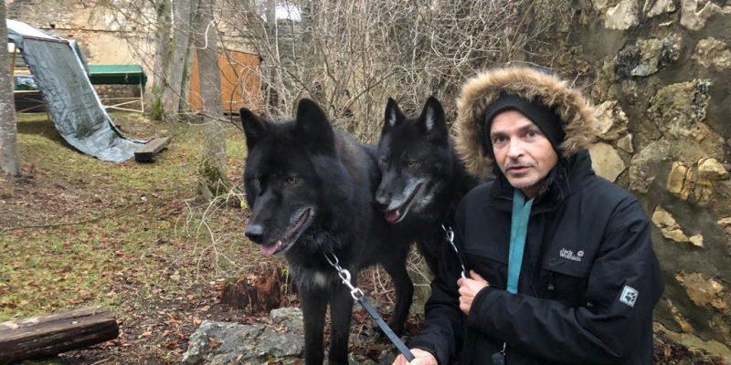 black wolves for Films on set