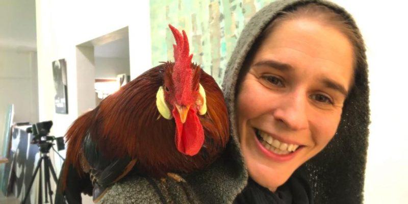 Animal Actor Chicken