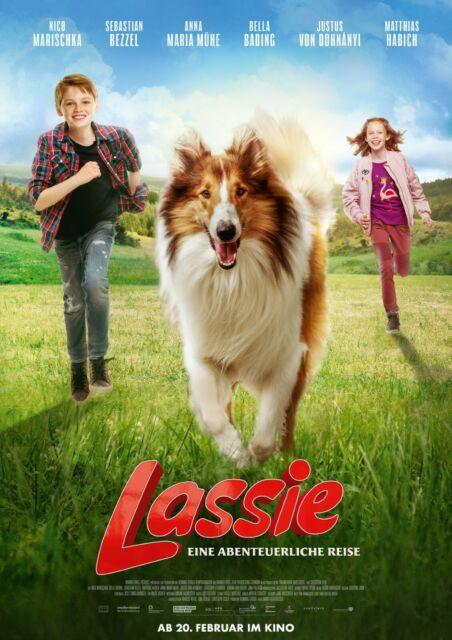 Lassie Movie Film Wolf