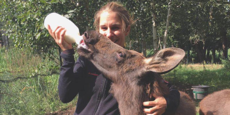 Animal Actor Deer
