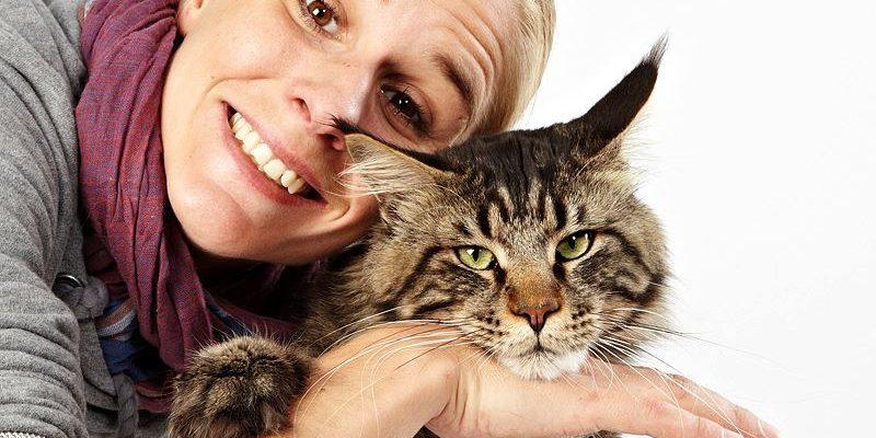 Animal Actors Cats