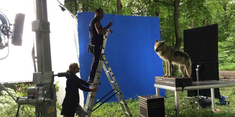 Blue Screen Wolf