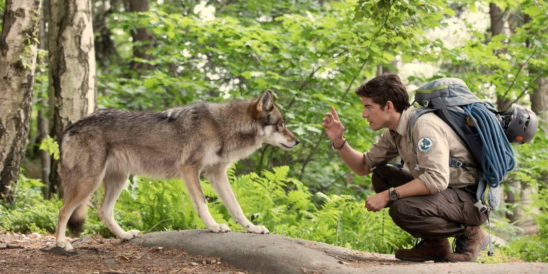 Making of Wolf