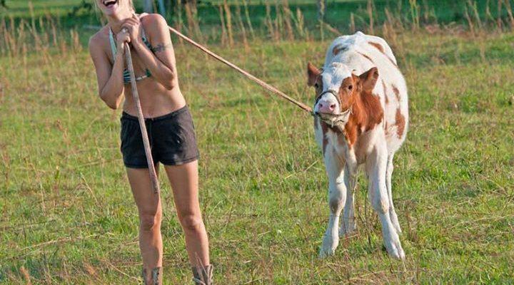 Animal Actors Cows