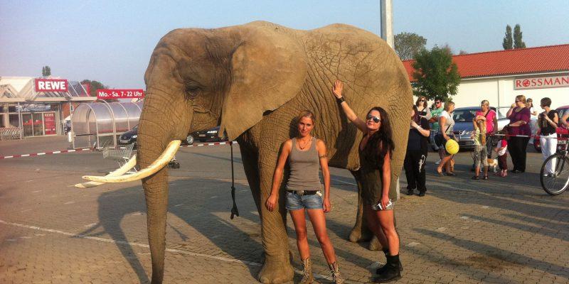 Animal Actor Elephant
