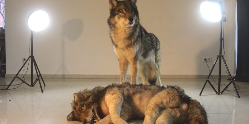 Wolf and Dummy