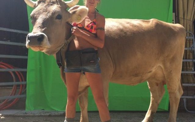 Animal Actor Cow